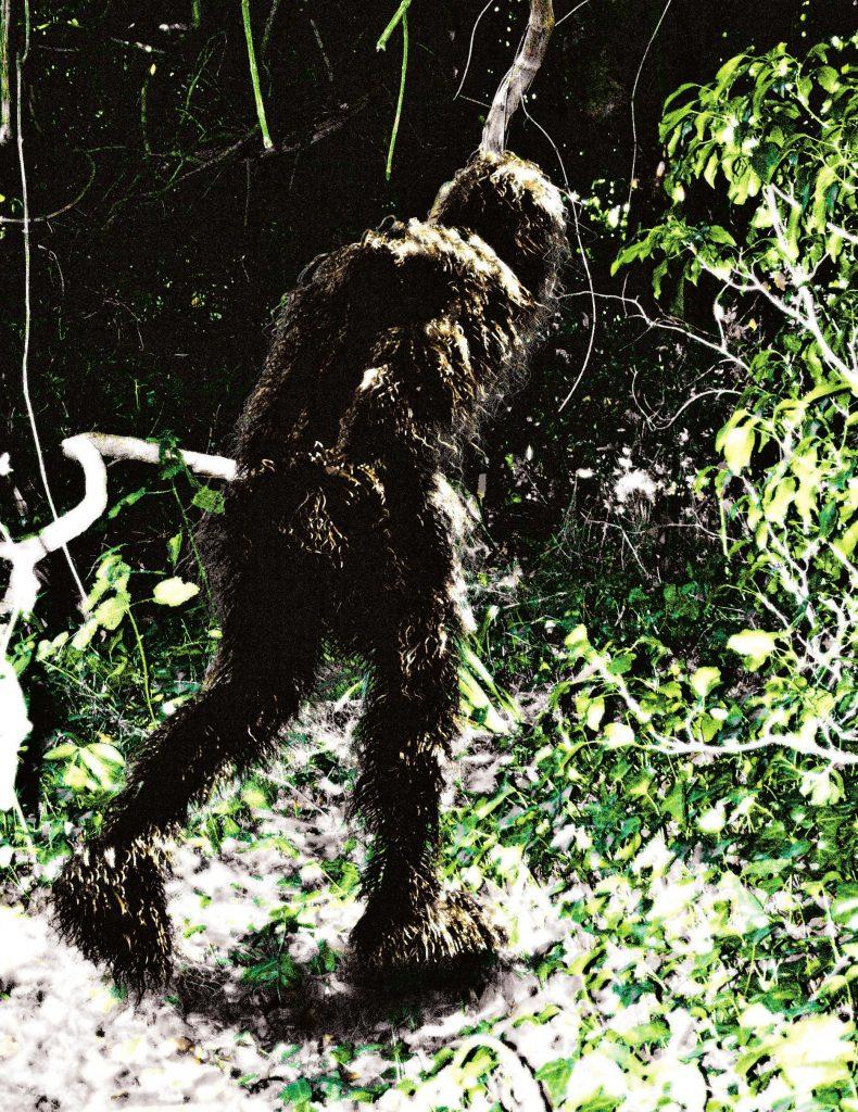 Bigfoot photos woodland ca