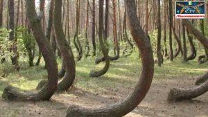 VIDEO: Byl polský les svědkem utajených nacistických pokusů?