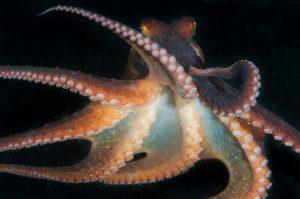 Chobotnice jsou prý původem mimozemšťané!
