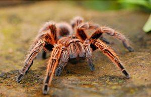 Přitahovala hra slavného hudebníka pavouky?