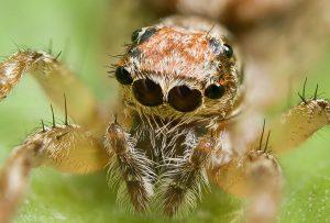 VIDEO: Záhadný déšť pavouků v Brazílii