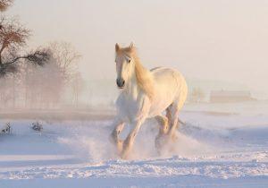 Zjevuje se u slovenských Žemberovců přízračný kůň?