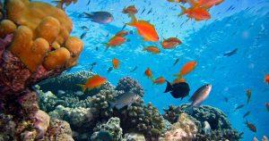 Korálové útesy přečkaly smrt dinosaurů: Nezničí je ani člověk?