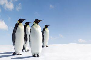 Stojí za záhadou mumifikovaných tučňáků počasí?