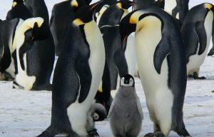 Vědci nemohou vyřešit záhadu mumifikovaných tučňáků