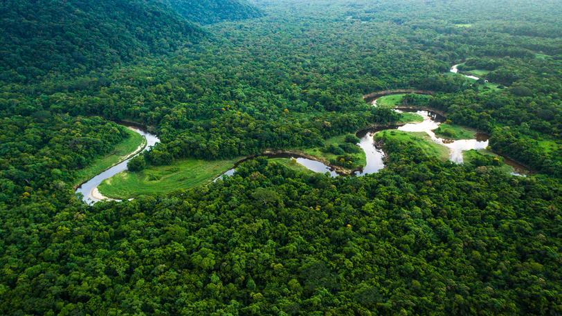 Amazonský prales: Prý jde o největší lékárnu světa