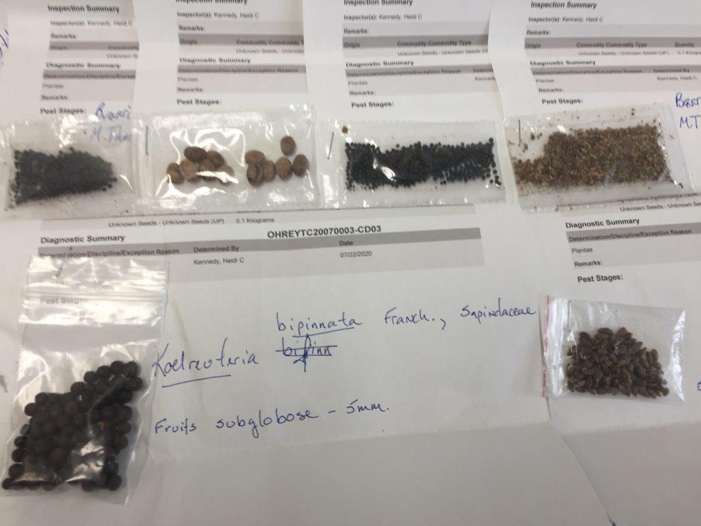 Různá semena ze zásilek americkým občanům, foto USDA APHIS