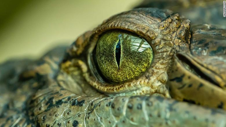 Austrálii kdysi obýval pětimetrový krokodýl. Mohl přežít dodnes?