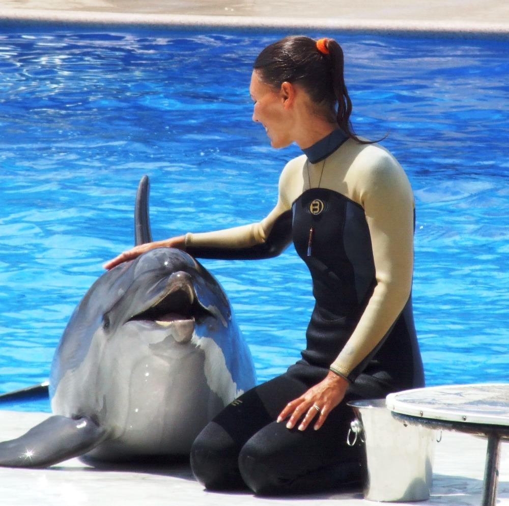 Rozkaz pro delfína: Zabij i miluj člověka!