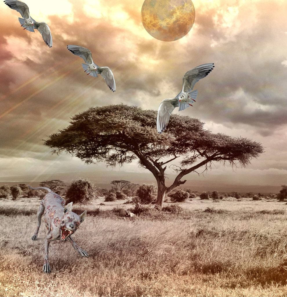 Podle některých badatelů jsou vlkodlaci ve skutečnosti jen kojoti či zdivočelí nebo nemocní psi. FOTO: Pixabay