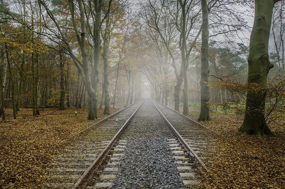 Záhadné události v polském lese: Jak to vysvětlíte?