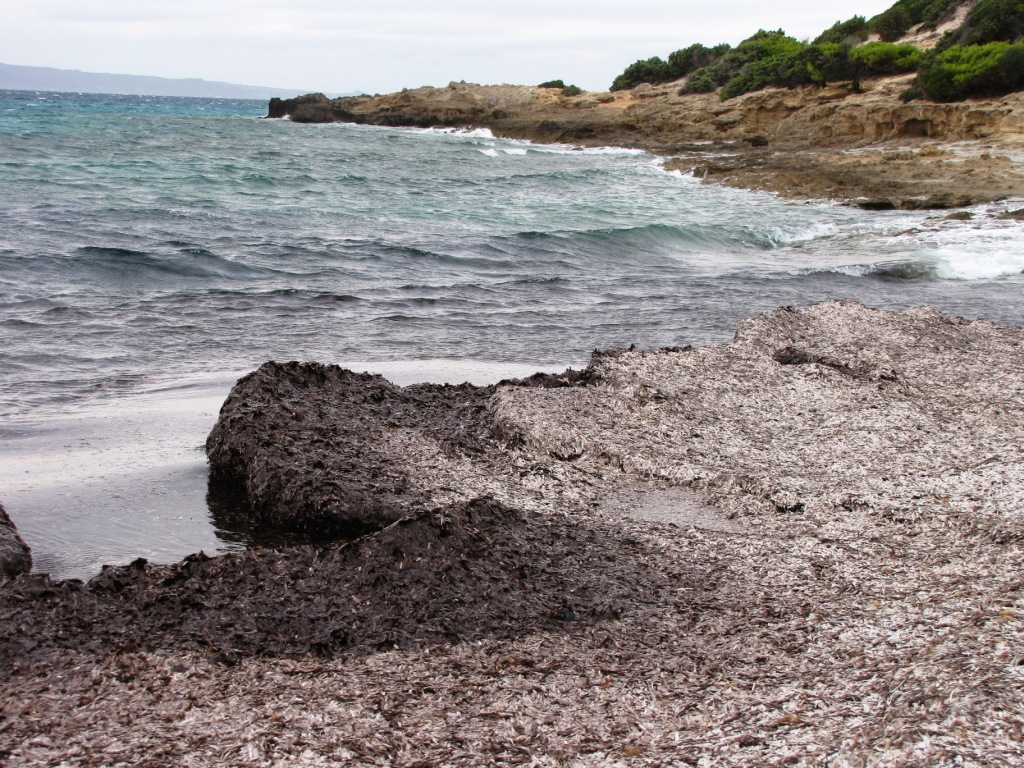 Ne všechny odumřelé zbytky posidonie dokáže moře modelovat do podoby Neptunových koulí