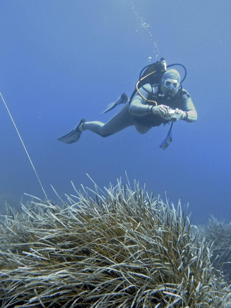 Potápěč nad porostem mořské trávy – posidonie.