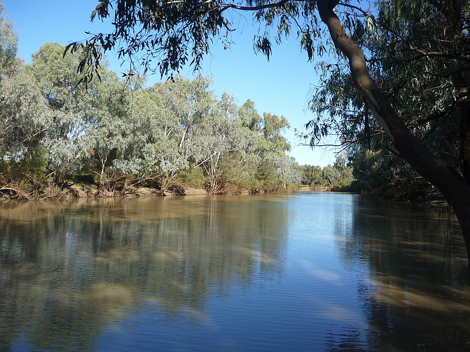 Napajedlo Wilga poblíž řeky Barcoo v Queenslandu děsí tajemným jekotem. Foto: Carole MacKinney / Creative Commons / volné dílo